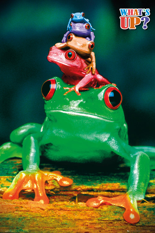 5 Frogs Colours Maxi Poster
