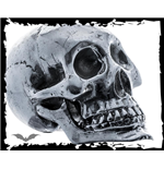 Big skull for decoration in silver color